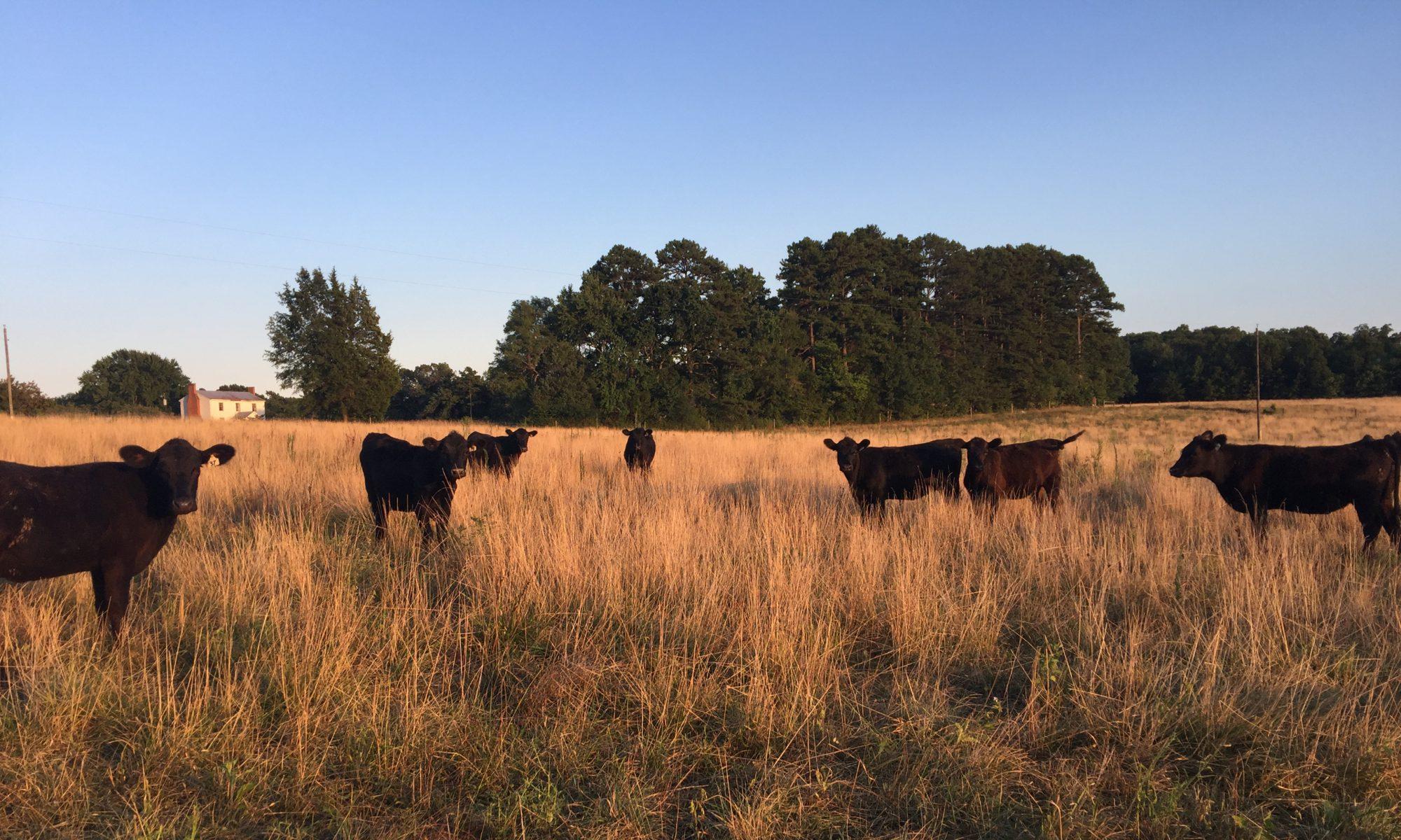 VA Farmwife Life
